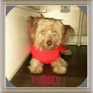 Pudsey_2